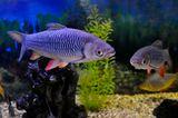 природа,рыба,разное,аквариум