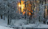 зима,утро,рассвет,солнце,деревья,ветви,лед,иней,снег