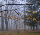 Ноябрьское утро
