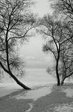 Ивы зимой.Побережье Финского залива.