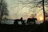 деревня, повозка, лошадь, на закате, фото Лидии Киприч