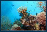 Эта крылатка терпеливо ждала, пока две других гнали в ее сторону стайку мелкой рыбешки. Красное Море.