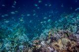 Batu Bolong Reef.