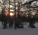 """Зимний полдень, - 32, мороз... выше солнце не поднимается, через час уже закат... Из серии """" Ловцы солнца """""""