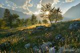 Долина реки Чулышман, Горный Алтай -------------- Приглашаю в фото-походы и авто-фото-туры. http://pohodnik.info