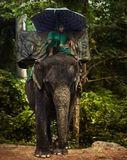 В Камбоджийских джунглях.