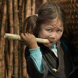 Северный Вьетнам. Сапа. Здесь население от мала до велика с удовольствием грызёт сахарный тростник, жертвуя своими зубами...