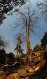 По храмам Ангкора (Камбоджа)