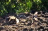 В первый день первого весеннего месяца по стихийно сложившейся традиции в России отмечается День кошек. Интересно, что многие народы, в свою очередь, установили национальные дни чествования этих самых близких человеку домашних обитателей. Например, в США кошек чествуют 29 октября, в Польше — 17 февраля, в Японии — 22 февраля. А основанием для всех национальных Дней кошек стал Всемирный день кошек, отмечаемый 8 августа.