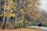 Ботаника. Осень.