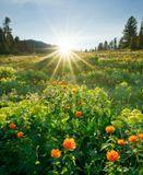 Россия, Красноярский край, природный парк Ергаки, цветочная поляна недалеко от озера Светлое, июнь 2012.
