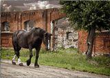 """""""Четыре копыта, облезлая шкура...По грязной дороге плетётся понуроЗабывшая думать о чём-то хорошем, Давно ко всему безразличная лошадь.Она родилась жеребёнком беспечным,Но скоро хомут опустился на плечи,И кнут над спиной заметался со свистом...Забылась лужайка в ромашках душистых,Забылось дыхание матери рыжей...Лишь месят копыта дорожную жижу,И только сгибается всё тяжелееКогда-то красивая гордая шея."""