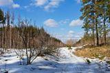Март, лес, весна