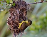 Вьетнам,птицы,гнездо,природа