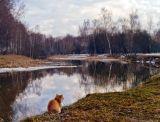 Природа,весна,кошка,закат