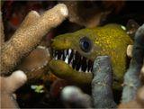 Никогда не видел мурену с таким большим количеством зубов :))