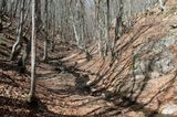 Весной совершаются чудеса. Статичные фигуры движутся, бегут - как эти деревья, а такой динамичный по своей природе ручей - кажется застывшим по сравнению с ними.Фото из пешеходного крымского похода, апрель 2013Крым весна природа