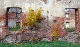 деревце на фоне разрушенной стены.Выборг. Сейчас его уже там нет, а жаль.