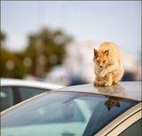 Тенерифе. май 13. Кот уличный, боевой.