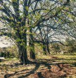 Фото обработано  программой HDR Efex Pro Presets - Granys Attic