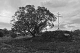природа,крест,дерево,черно-белое