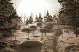 тропинка среди снега в лесу