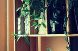 домашняя растительность :) и фигурные бутылочки