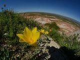 Танюша, поздравляю с Днём рождения!Хотела бы подарить планету, но не могу, поэтому дарю маленький кусочек нашей большой планеты :)http://www.lensart.ru/album-uid-1b40-aid-3871-sh-1...
