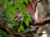 поза, взгяд птицы, на мой взгляд, выражает в какой -то мере недовольство, скептицизм. Это мое видение. А что видите вы?