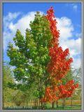Это одно дерево. Внизу ствол раздваивается и получаются разные политические кредо.