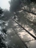 Стремление вырваться из тенет тумана к свету и звукам...