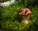Забралась на гриб лягушкаТак виднее ей опушка Смотрит вдаль, всё ждёт ЕгоПринца сердца своего...