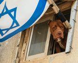Истинное лицо Израильского агрессора