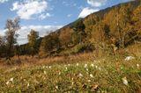 пейзаж крокусы Софийское ущелье
