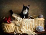 Познакомьтесь с маленьким котиком по имени Дым. Это нежнейшее и ласковейшее создание живёт в городе Арма, в Северной Ирландии в доме моей старшей дочери.