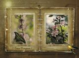 """Леночка /Лена Белова/, сердечно поздравляю тебя с Днем Рождения! Пусть в твоем сердце всегда будет весна, радость, обновление. Пусть жизнь твоя напоминает горный ручеек – живой, чистый, проникновенный. Пусть над тобой и внутри всегда сияет солнце, а душа парит, как птица. Крепкого тебе здоровья, вдохновения, любви! Слушайте красивую музыку: Гела Гуралиа и Полина Конкина - """"Tell him"""" - http://www.1tv.ru/p/voice/video/296/p68582"""