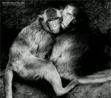 Эта очаровательная пара обезьян жители Таиланда, города Phra Prang Sam Yot - города обезьян. В этом городе обезьяны являются почитаемым животным, и местные жители относятся к ним с присущей тайцам толерантностью и уважением. А обезьяны, в свою очередь, этим пользуются и творят что взбредет им в их обезьяньи головы: воруют еду, лазают по окнам домов и крышам, прыгают по проводам, как по лианам и пугают, приезжающих на них посмотреть, туристов:).