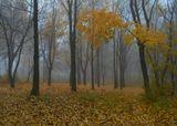 Туман, утро в парке