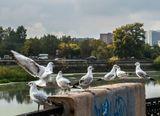 Сценка из жизни птиц, но и у людей такое тоже бываетживотные птицы