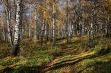 Небывало тёплые денёчки:    Бабье лето- чудо в октябре!Время непредвиденной отсрочкиНашей долгой матушке-зиме.