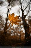 Осенний лист отправился в полёт, От ветки оторвавшись, начал путь. Ему неважно, где он упадёт, Что ждёт его - ведь он готов рискнуть. Возможно, полетев на ветра свист И в хороводе бешено кружась, Наскучив ветру, будет брошен вниз И кем-то ненароком втоптан в грязь. Быть может, красоте благодаря Собою он украсит чей-то дом, И, щедро краски осени даря, Он смерть свою отложит на потом. Скорей же суждено ему лежать, Грустя о прошлом, в луже дождевой И, небо вспоминая, снега ждать, И прорастать весеннею травой