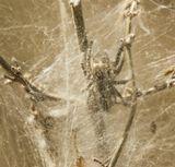 паук, паутина