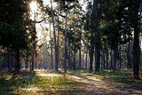 Полно размерное изображение этой картины  находится тут: http://savephoto.ru/F/11qkqghelahkz21 Просьба оценщикам  посмотреть оба варианта!