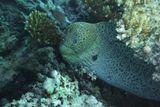 Снимала на глубине 5-6 метров.Гигантская Мурена, около трёх метров длинойКрасное море