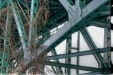 Tangled roots grasping at the steel bridge.....