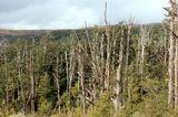 Национальный парк Тонгариро. Место, где отчасти снимали Мордор