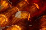 Филиппины. Поверхность твердого коралла, снятая с увеличением 3:1.