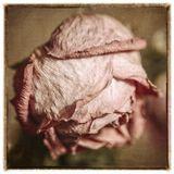 Свой прежний блеск утратили цветы, Но сохранили душу красоты.Шекспир.