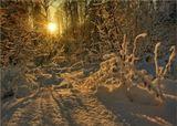 Волшебные краски закатаЗакат в лесу