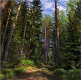 лес, лето